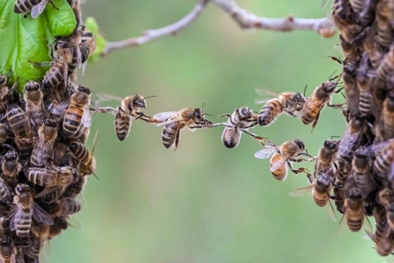 Приметы и поверья на сегодня, 30 апреля 2020 года, в день Зосима Пчельника
